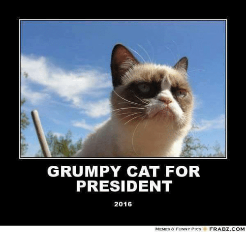 Cats, Funny, and Meme: GRUMPY CAT FOR  PRESIDENT  2016  MEMES & FUNNY PICs  FRABZ.COM