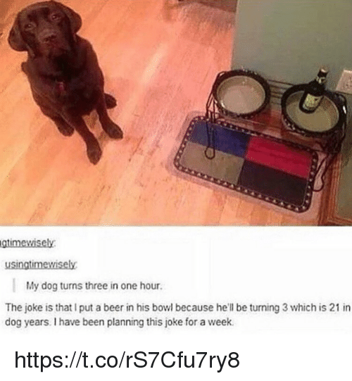 Beer, Memes, and Hell: gtimewisely  usingtimewisely  My dog turns three in one hour.  The joke is that I put a beer in his bowl because he'll be turning 3 which is 21 in  dog years. I have been planning this joke for a week. https://t.co/rS7Cfu7ry8