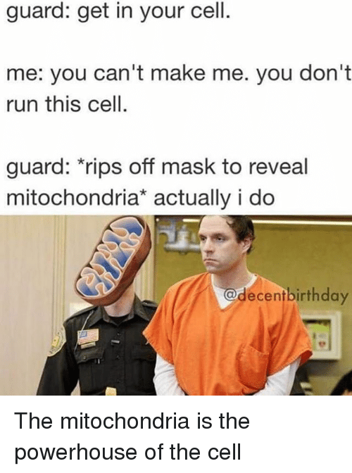 Memes, Run, and Mitochondria: guard: get in your cell  me: you can't make me. you don't  run this cell.  guard: rips off mask to reveal  mitochondria* actually i do  @decentbirthda The mitochondria is the powerhouse of the cell