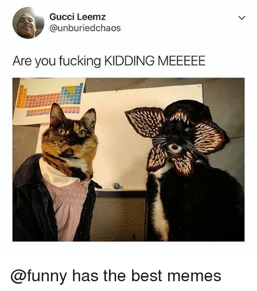 Fucking, Funny, and Gucci: Gucci Leemz  @unburiedchaos  Are you fucking KIDDING MEEEEE @funny has the best memes