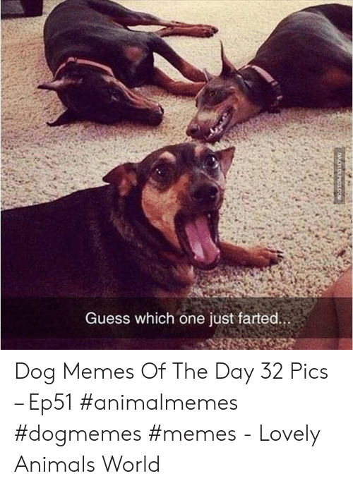 Animals, Memes, and Guess: Guess which one just farted.  DAILYLOLPICS.COM Dog Memes Of The Day 32 Pics – Ep51 #animalmemes #dogmemes #memes - Lovely Animals World