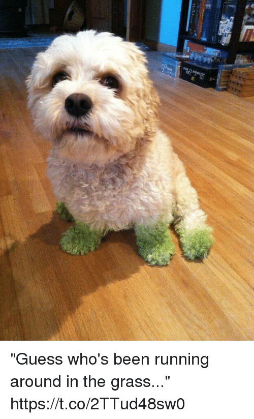 "Funny, Awkward, and Guess: ""Guess who's been running around in the grass..."" https://t.co/2TTud48sw0"