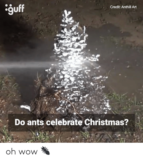 Guff Credit Anthill Art Do Ants Celebrate Christmas? Oh Wow