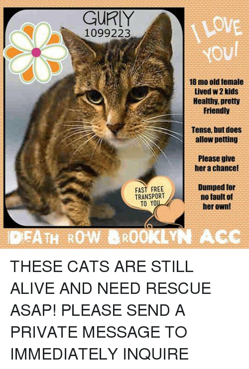 GURLY LOWE 1099223 YOUl 18 Mo Old Female Lived W2 Kids