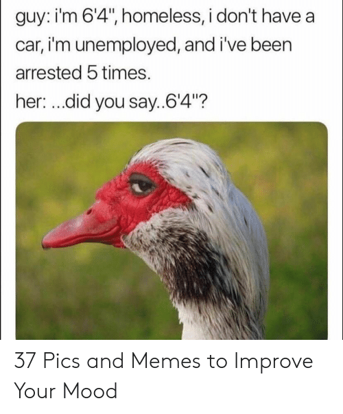 """Homeless, Memes, and Mood: guy: i'm 6'4"""", homeless, i don't have a  car, i'm unemployed, and i've been  arrested 5 times.  her: ...did you say..64""""? 37 Pics and Memes to Improve Your Mood"""