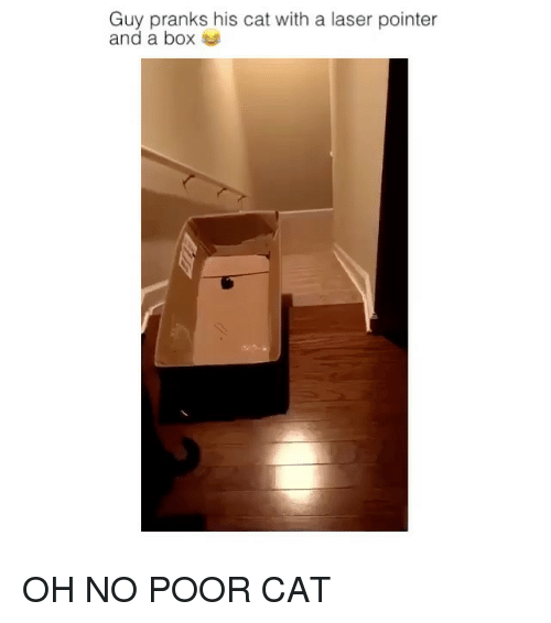 guy pranks his cat with a laser pointer and a 11636006 ✅ 25 best memes about laser pointer laser pointer memes,Laser Pointers Funny Airplane Meme