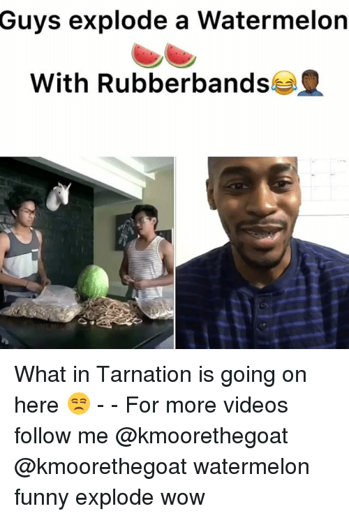 Funny, Memes, and Videos: Guys explode a Watermelon  With Rubberbands What in Tarnation is going on here 😒 - - For more videos follow me @kmoorethegoat @kmoorethegoat watermelon funny explode wow