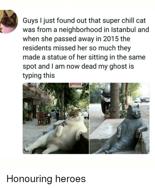 Chill, Ghost, and Heroes: Guys I just found out that super chill cat  was from a neighborhood in Istanbul and  when she passed away in 2015 the  residents missed her so much they  made a statue of her sitting in the same  spot and l am now dead my ghost is  typing this Honouring heroes