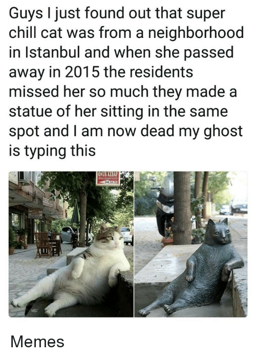 Chill, Memes, and Ghost: Guys I just found out that super  chill cat was from a neighborhood  in Istanbul and when she passed  away in 2015 the residents  missed her so much they made a  statue of her sitting in the same  spot and I am now dead my ghost  is typing this  ONUR KEBAP Memes