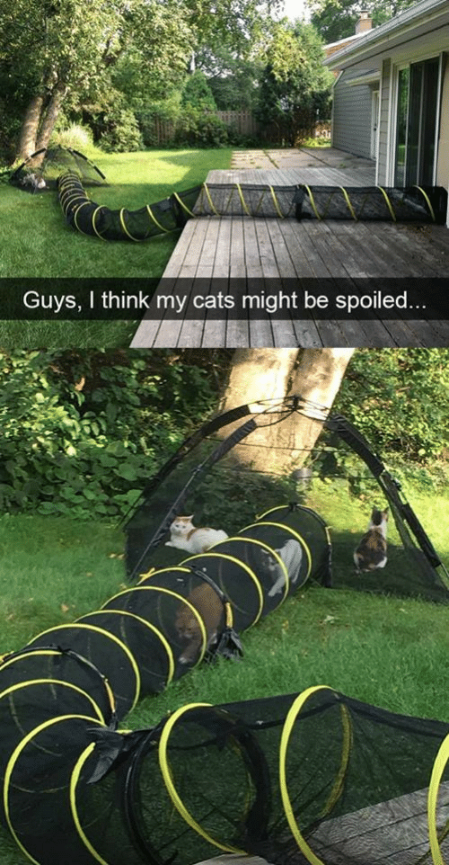 Cats, Think, and Guys: Guys, I think my cats might be spoiled