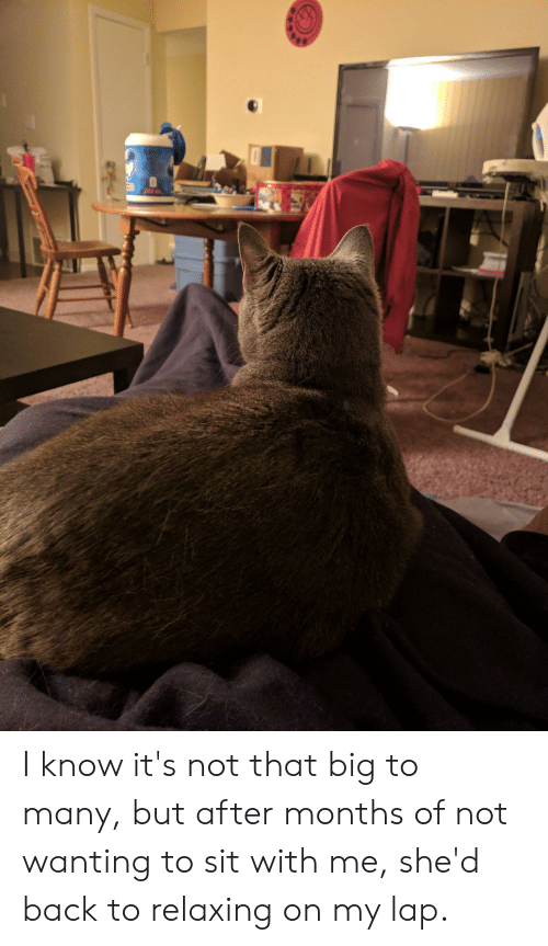 Back, Big, and Months: gw. I know it's not that big to many, but after months of not wanting to sit with me, she'd back to relaxing on my lap.