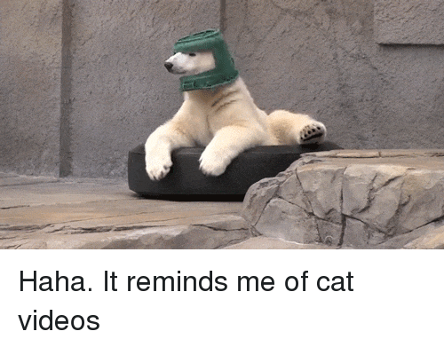 Funny, Videos, and Haha: Haha. It reminds me of cat videos
