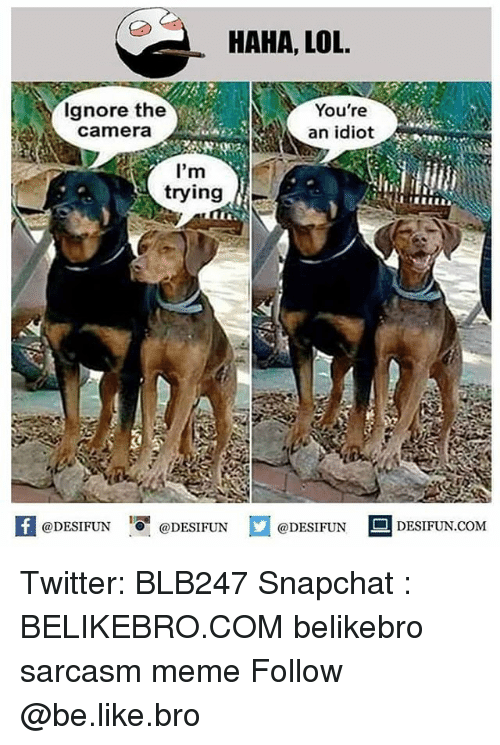 Be Like, Lol, and Meme: HAHA, LOL  Ignore the  camera  You're  an idiot  tryinge  1  @DESIFUN @DESIFUN @DESIFUN DESIFUN.COM Twitter: BLB247 Snapchat : BELIKEBRO.COM belikebro sarcasm meme Follow @be.like.bro