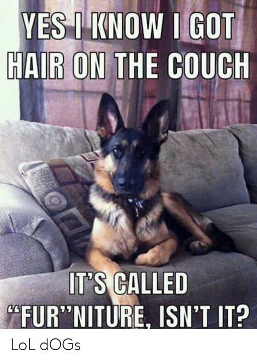 25 Best Memes About Lol Dogs Lol Dogs Memes
