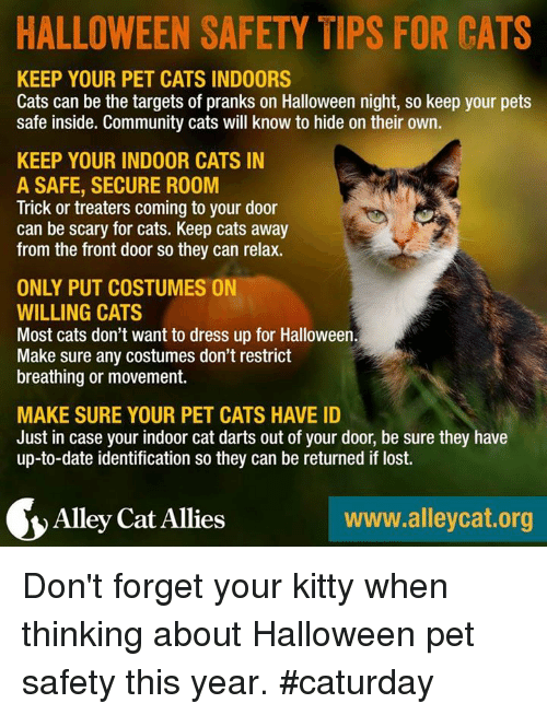 Halloween Safety Tips For Cats Keep Your Pet Cats Indoors Cats Can