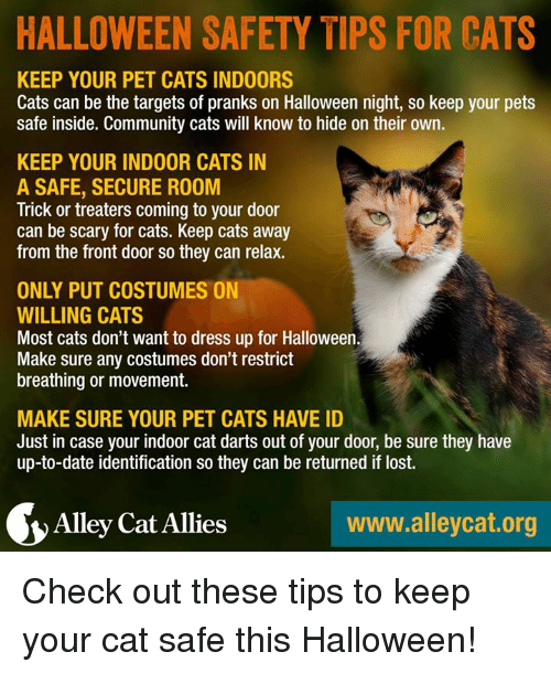 Community, Dating, And Halloween: HALLOWEEN SAFETY TIPS FOR CATS KEEP YOUR PET  CATS