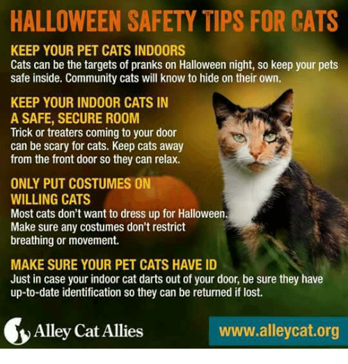 Fourth of July Cat Safety Tips--Keep Kitty Aways from Hostile Aliens