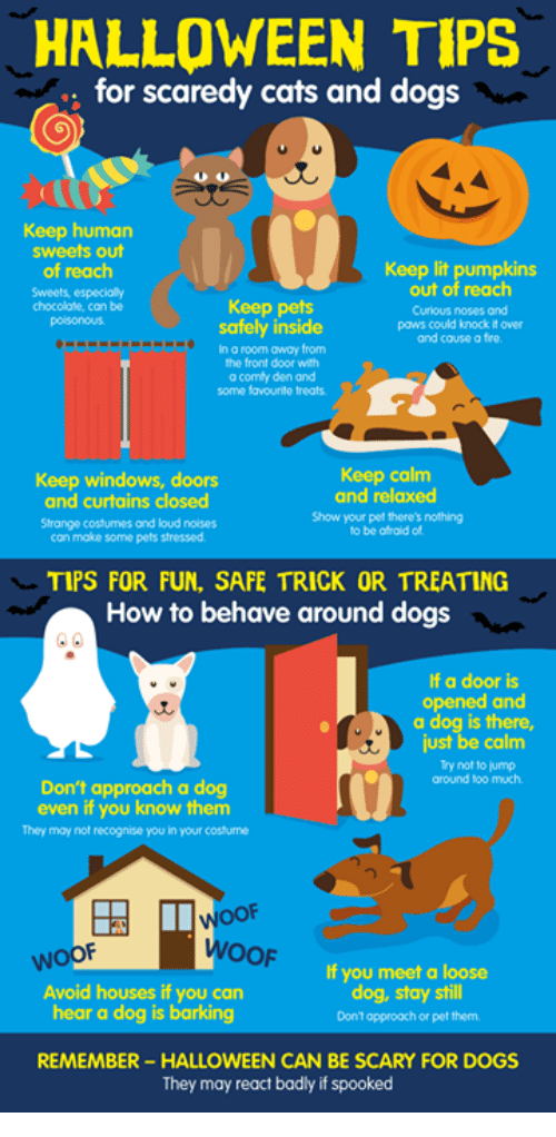 Halloween Tips For Scaredy Cats And Dogs Keep Human Sweets Out Keep