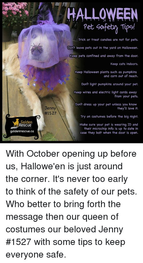 Halloween Trick Or Treat Candies Are Not For Pets Dont Leave Pets