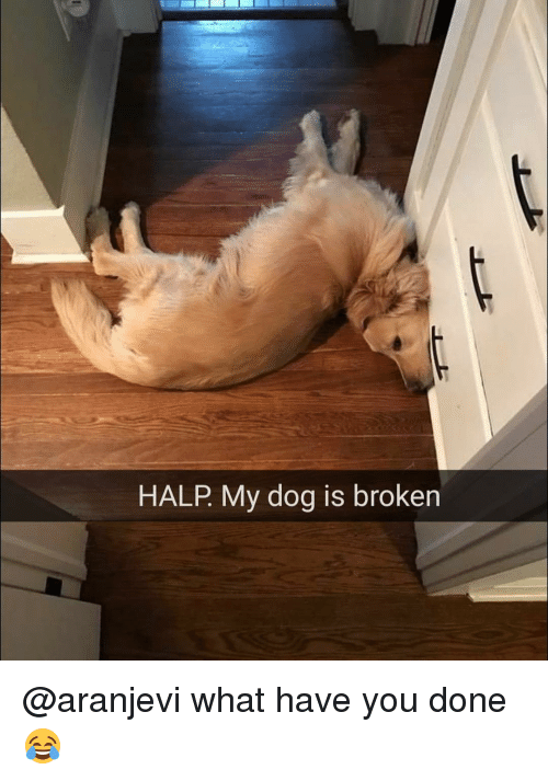 HALP My Dog Is Broken What Have You Done 😂 | Funny Meme on ME.ME
