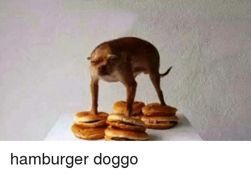 Doggo, Hamburger, and Doggos: hamburger doggo