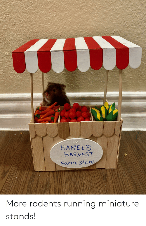 Running, Store, and More: HAMEE'S  HARVEST  Farm Store More rodents running miniature stands!