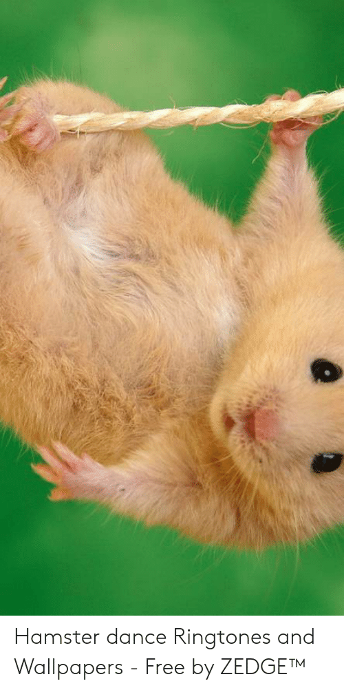 Hamster Dance Ringtones And Wallpapers Free By Zedge