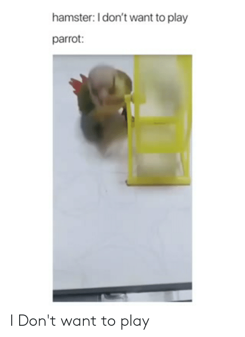 Memes, Hamster, and 🤖: hamster: I don't want to play  parrot I Don't want to play