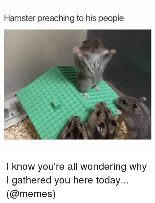 hamster-preaching-to-his-people-i-know-youre-all-wondering-11985041.png