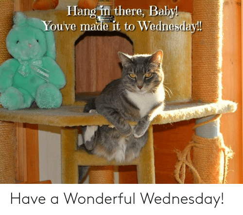 Memes, Wednesday, and Baby: Hang in there, Baby  Youve made it to Wednesday! Have a Wonderful Wednesday!