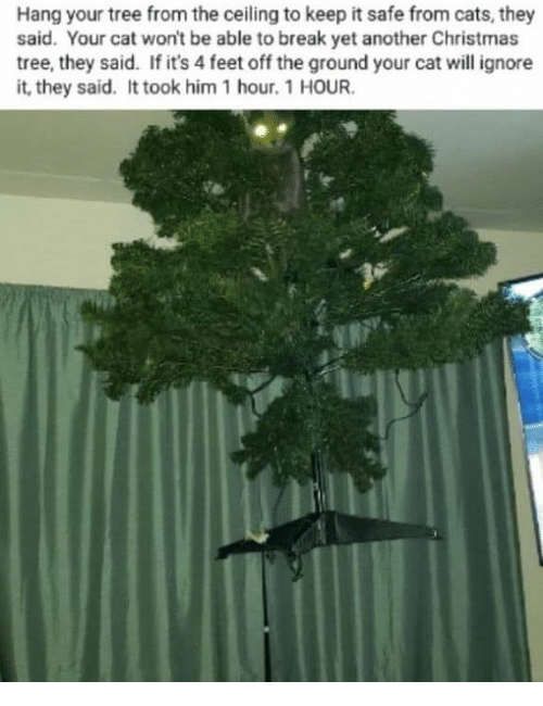 Hang Your Tree From The Ceiling To Keep It Safe From Cats