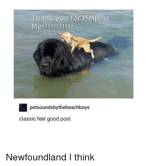 A Good Dog For Me