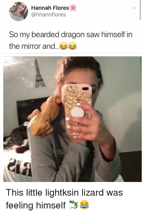 Hannah Flores So My Bearded Dragon Saw Himself in the Mirror