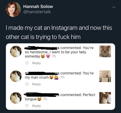 Instagram, Fuck, and Cat: Hannah Solow  @hamstertalk  I made my cat an Instagram and now this  other cat is trying to fuck him  es commented: You're  so handsome, I want to be your lady  someday  Reply  mis commented: You're  my man crush7h  Reply  commented: Perfect  tongue 7h  Reply