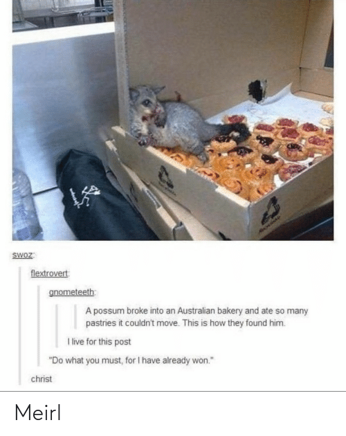"""Live, Possum, and Australian: HAOLIAY  SWOZ:  flextrovert  gnometeeth  A possum broke into an Australian bakery and ate so many  pastries it couldn't move. This is how they found him.  I live for this post  """"Do what you must, for I have already won.""""  christ Meirl"""
