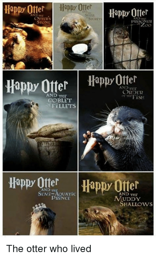 Funny, Otters, and Prince: Happ Otterappy Otter  Happy Ofter  AND TEE  OTTERS  STONE  PRISONER  Happy OtterHpOtter  AND THE  ORDER  ar TTrFİSH  AND THE  GOBLET  FiLLETS  Happy OtterHappy Offer  SANDT,AOUATİC  AND THE  UDDY  HALLOWS  PRİNCE The otter who lived