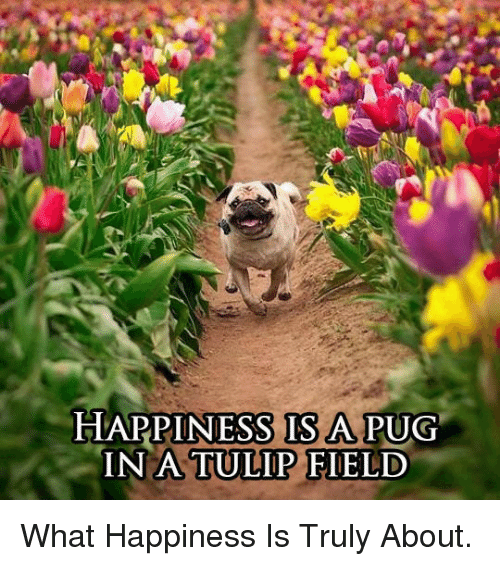 Happiness, Pug, and Tulip: HAPPINESS IS A PUG  IN A TULIP FIELD <p>What Happiness Is Truly About.</p>