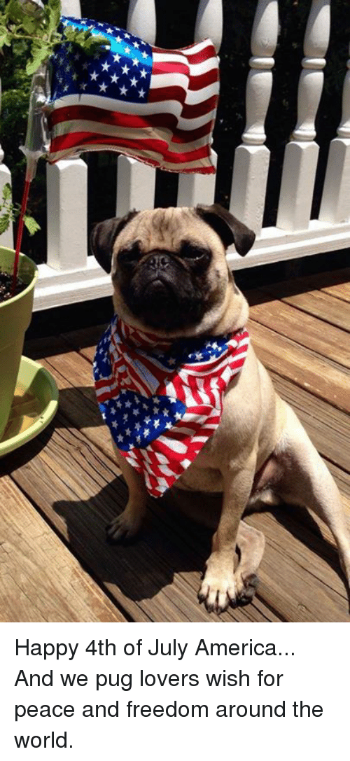 America, Memes, And 4th Of July: Happy 4th Of July America. Home Design Ideas
