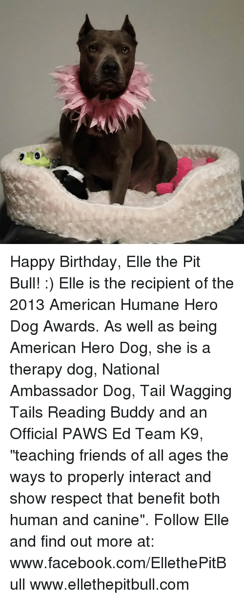 "Memes, Happy Birthday, and Bulls: Happy Birthday, Elle the Pit Bull! :) Elle is the recipient of the 2013 American Humane Hero Dog Awards. As well as being American Hero Dog, she is a therapy dog, National Ambassador Dog, Tail Wagging Tails Reading Buddy and an Official PAWS Ed Team K9, ""teaching friends of all ages the ways to properly interact and show respect that benefit both human and canine"".  Follow Elle and find out more at: www.facebook.com/EllethePitBull www.ellethepitbull.com"