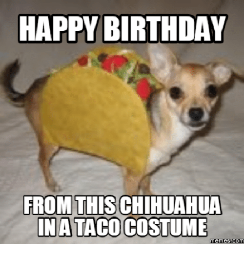 Funny Birthday Meme Mexican : Happy birthday from this chihuahua taco memes