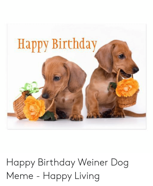 happy birthday images with dachshunds | Michelle & The ... |Weiner Dog Birthday Memes