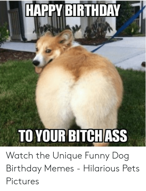 Happy Birthday To Your Bitchass Watch The Unique Funny Dog Birthday Memes Hilarious Pets Pictures Birthday Meme On Me Me
