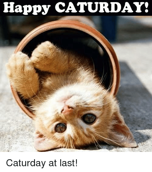 Happy Caturday Caturday At Last Caturday Meme On Me Me