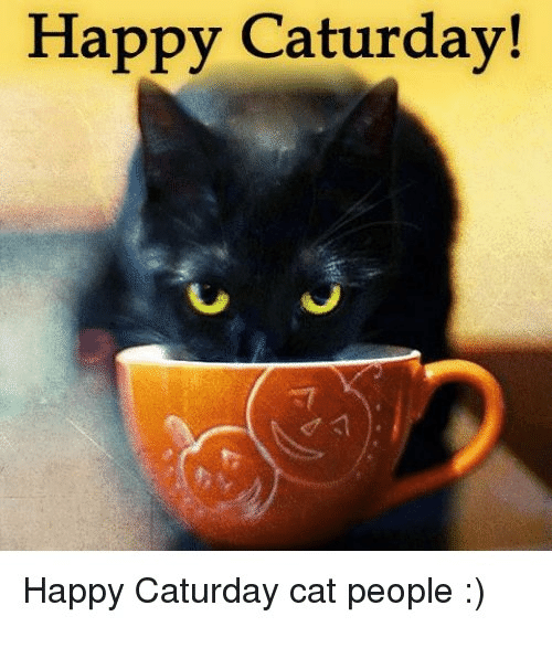 Caturday, Memes, and Happy: Happy Caturday!  Happy Caturday cat people