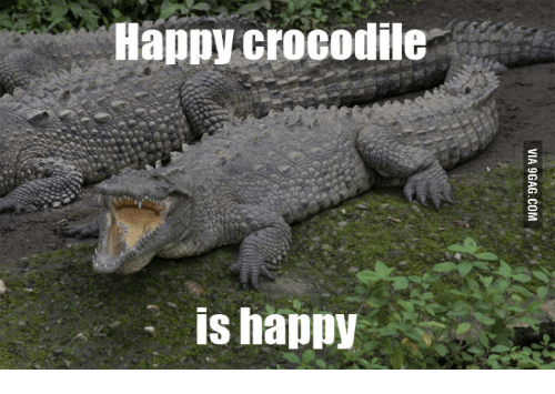 Crocodile, Crocodiles, and Saltwater Crocodile Picture: Happy crocodile  is happy