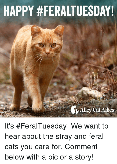 Cats, Memes, and 🤖: HAPPY #FERALTUESDAY!  Alley Cat Allies It's #FeralTuesday! We want to hear about the stray and feral cats you care for. Comment below with a pic or a story!