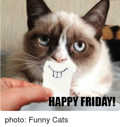 Funny Pictures About Friday: HAPPY FRIDAY! Photo Funny Cats