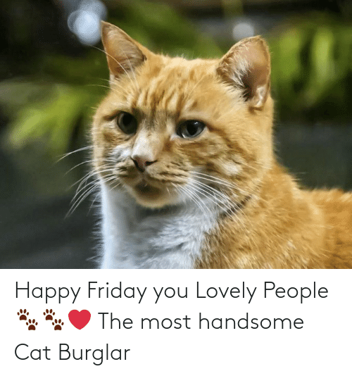 Happy Friday You Lovely People 🐾🐾 ️ the Most Handsome Cat ...