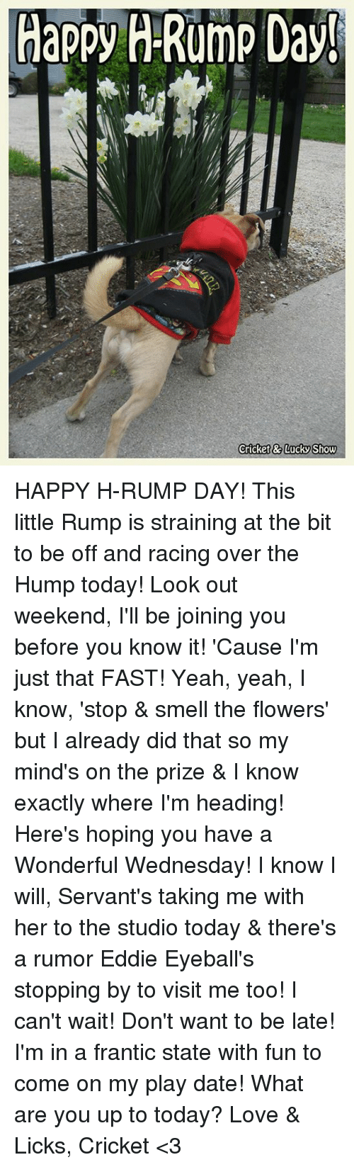 Love, Memes, and Smell: Happy H-Rump Day!  Cricket&7LUCKS how HAPPY H-RUMP DAY!  This little Rump is straining at the bit to be off and racing over the Hump today!  Look out weekend, I'll be joining you before you know it!  'Cause I'm just that FAST!  Yeah, yeah, I know, 'stop & smell the flowers' but I already did that so my mind's on the prize & I know exactly where I'm heading!  Here's hoping you have a Wonderful Wednesday!  I know I will, Servant's taking me with her to the studio today & there's a rumor Eddie Eyeball's stopping by to visit me too!  I can't wait!  Don't want to be late!  I'm in a frantic state with fun to come on my play date!  What are you up to today?  Love & Licks, Cricket <3