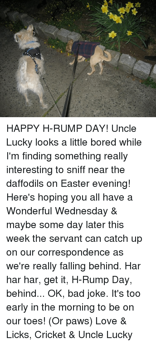Bad, Bored, and Easter: HAPPY H-RUMP DAY!  Uncle Lucky looks a little bored while I'm finding something really interesting to sniff near the daffodils on Easter evening!  Here's hoping you all have a Wonderful Wednesday & maybe some day later this week the servant can catch up on our correspondence as we're really falling behind.  Har har har, get it, H-Rump Day, behind... OK, bad joke.  It's too early in the morning to be on our toes!  (Or paws)  Love & Licks, Cricket & Uncle Lucky